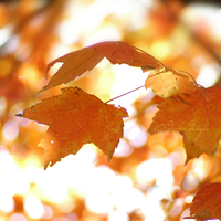 Fall is over... by onixa