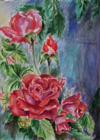 Roses 2 by danuta50