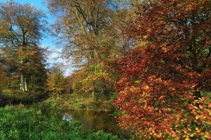 Minnowburn Autumn 09 III by Gerard1972