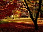 Autumn Contrasts by parallel-pam