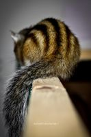 ..tail by Nicho90