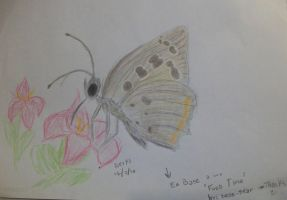 Draw Butterfly by Drixi
