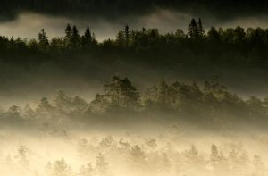 28.6.2014: Those Misty Forests by Suensyan