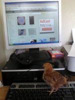I iz on compy by TheReapersApprentice