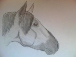 Horsey by TayMay135