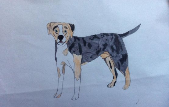 Ben the Catahoula Cur by Doggielover266