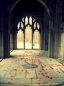 Rose petals. by mrs-lia-way
