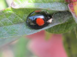 A different ladybird! by dtw42