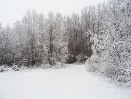 Winter forest 24 by MASYON