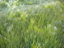 Sea of green by montmartre96