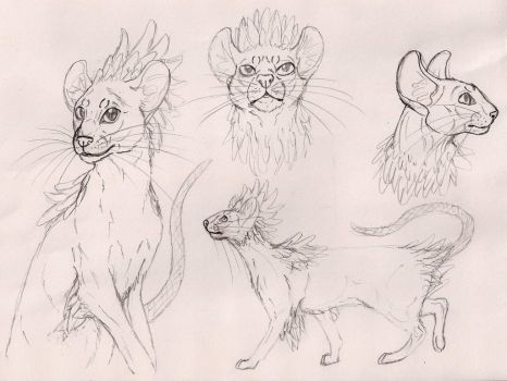 Mischling cat breed concept by MaichoMod