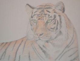 Tiger Sketch by whytheface92