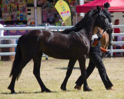 STOCK Canungra Show 2013-213 by fillyrox