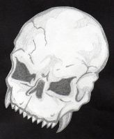 Skull Sketch by spiketail94