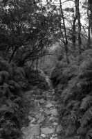 black and white forest path 2 by rayna23