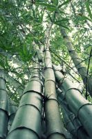 Bamboo by poshbeck