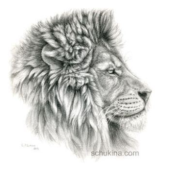 Lion - profile by sschukina