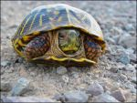 Colorful Turtle by SuicideBySafetyPin
