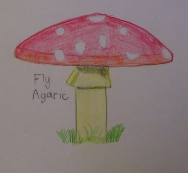 Amanita muscaria by Wave-Prime