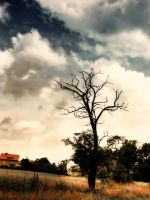 Withered tree by Kaddayah