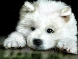 Pup of white wolf by E by Ellee22