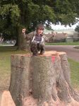 King of the Stump by dragonOllie15