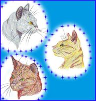 Warrior Cats by Kaylink by StarClan