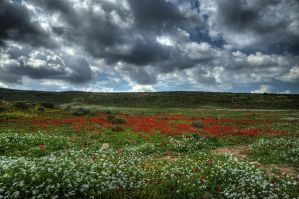 Anemones on  HDR by haimohayon