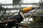 Tucan Dreams by TravelingPhotographs