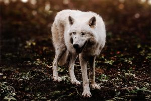Yellow Eyes by wolfenphotography