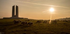 Sunset and Sheep by speciwavephotography