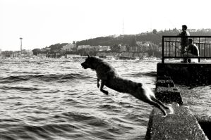 Dog Jump,Gasworks Park by NeighborJohn