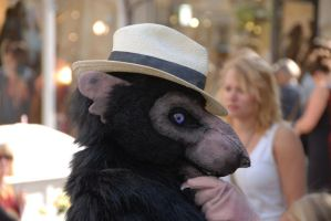 Rat in a Hat by CuriousCreatures