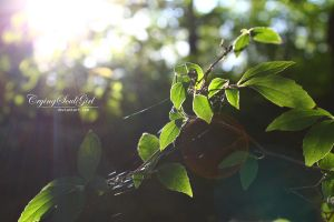 The Last Sunbeams. by CryingSoulGirl