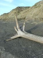Driftwood seat 1 by Arctic-Stock