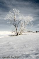 Winter Scene for a Tree by rdw283