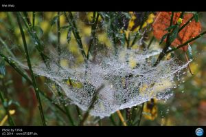 Wet Web by Joran-Belar