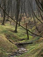 A long and winding ravine by leprzem