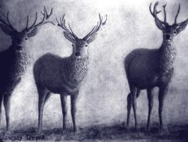 Deers by live-your-dreamss