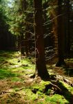 sunshine in a dark forest by Dieffi