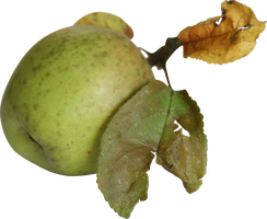 lying apple with leaves precut png by Nexu4