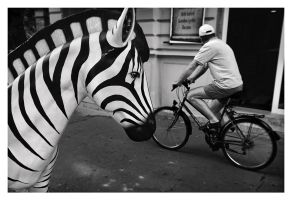 Zebra by Dionisic