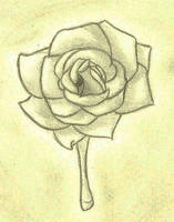Gray Rose by guardianhawkpool