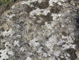 Lichen on Rock - Texture Stock by Somnovore