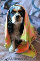 Wet Gizmo' by Maryl0u