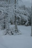 Snowy trees 3 by Arctic-Stock