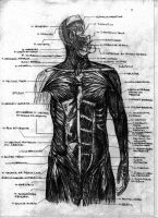 Old Anatomy Document by FreakOffTheLeash