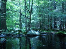 Forest Stock 4 by geddas-stock
