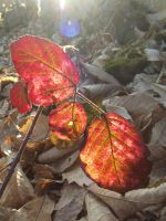 light spring in autumn leaf by Angeliqueperrin