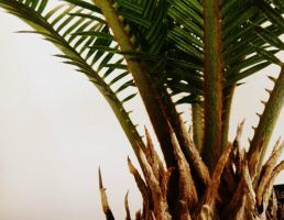 Cycad 3 by Nikee97